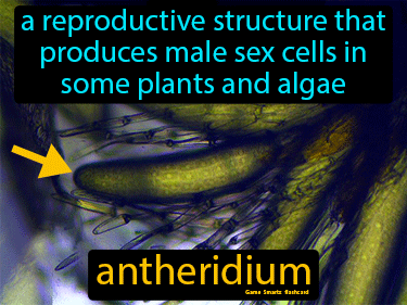 Antheridium Science Definition