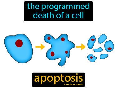 Apoptosis Science Definition