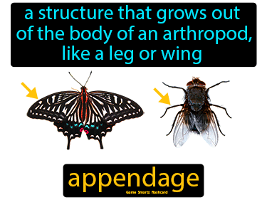 Appendage Science Definition
