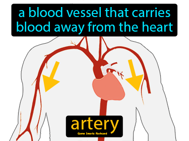 Artery Science Definition