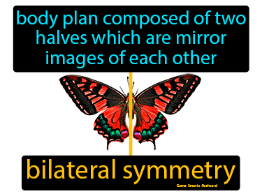 Bilateral Symmetry Science Definition