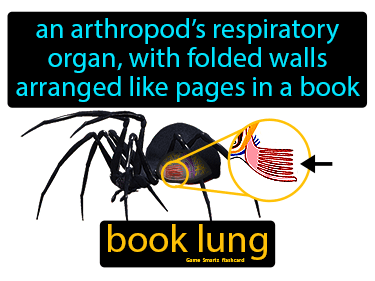 Book Lung Science Definition