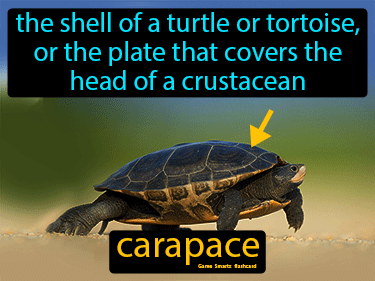 Carapace Science Definition