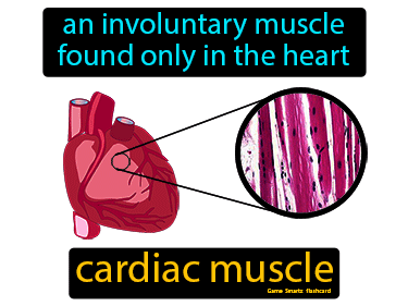 Cardiac Muscle Science Definition