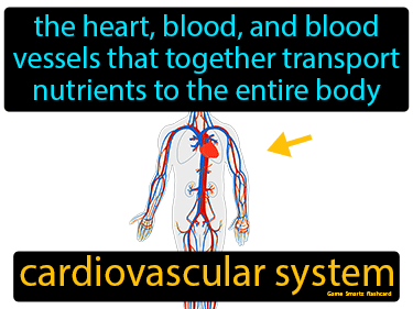 Cardiovascular System Science Definition