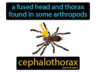 Cephalothorax Science Definition