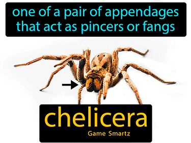 Chelicera Science Definition