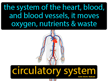 Circulatory System Science Definition
