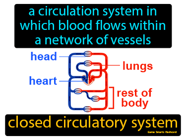 Closed Circulatory System Science Definition