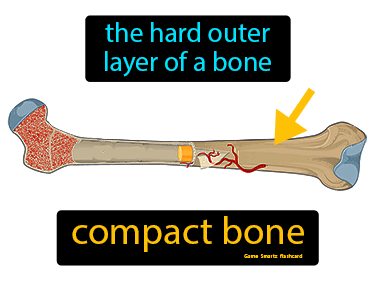 Compact Bone Science Definition