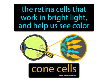 Cone (Cells) Science Definition