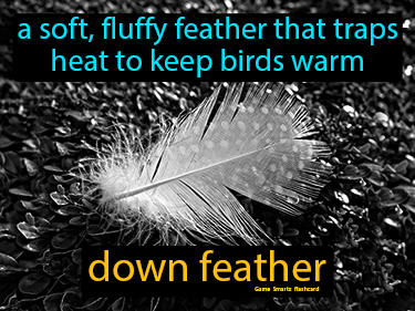 Down Feather Science Definition