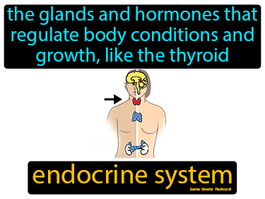 Endocrine System Science Definition