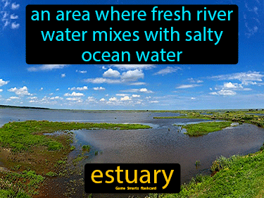 Estuary Science Definition