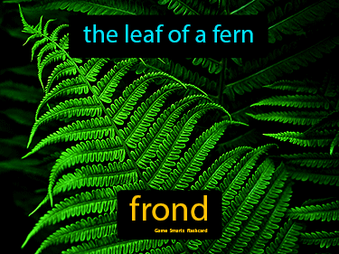 Frond Science Definition
