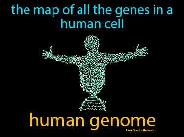 Human Genome Science Definition