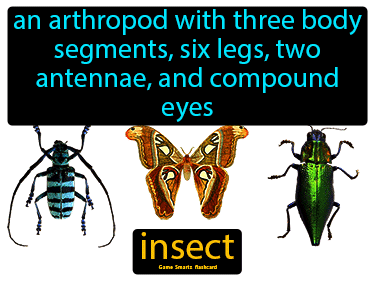 Insect Science Definition