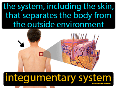 Integumentary System Science Definition