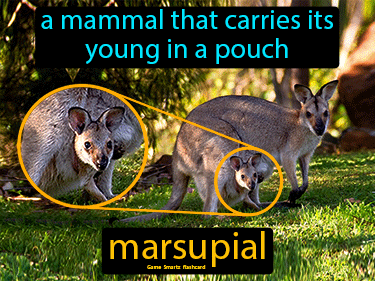 Marsupial Science Definition