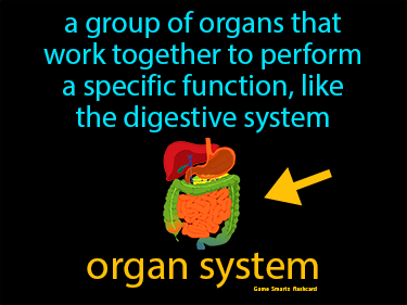 Organ System Science Definition