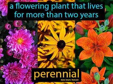Perennial Science Definition