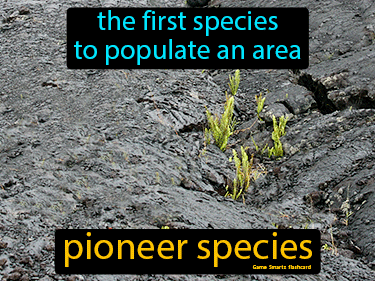 Pioneer Species Science Definition