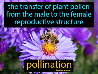 Pollination Science Definition