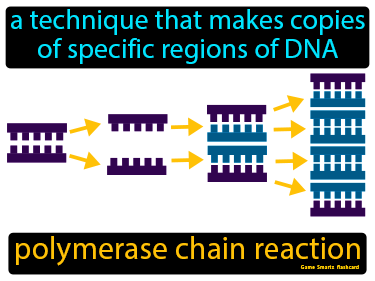 Polymerase Chain Reaction Science Definition