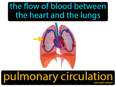 Pulmonary Circulation Science Definition