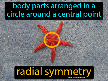 Radial Symmetry Science Definition