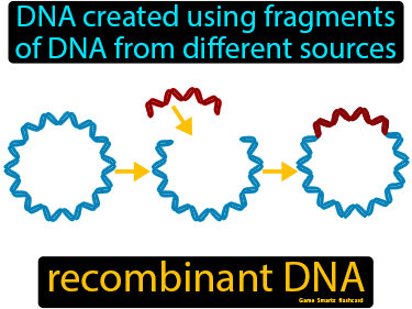Recombinant DNA Science Definition