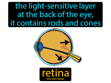 Retina Science Definition
