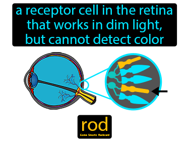 Rod Science Definition