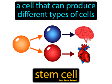 Stem Cell Science Definition
