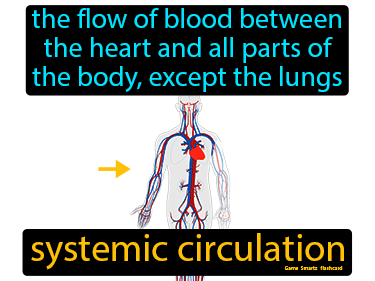 Systemic Circulation Science Definition