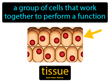 Tissue Science Definition