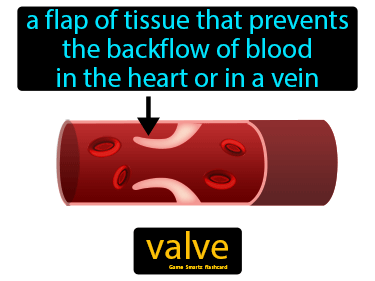 Valve Science Definition
