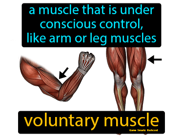 Voluntary Muscle Science Definition