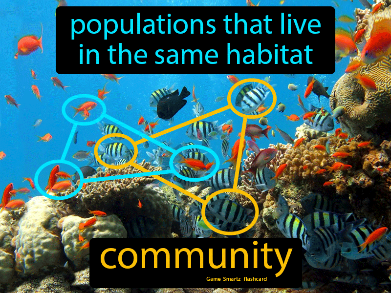 Community Definition: Populations that live in the same habitat. Biology