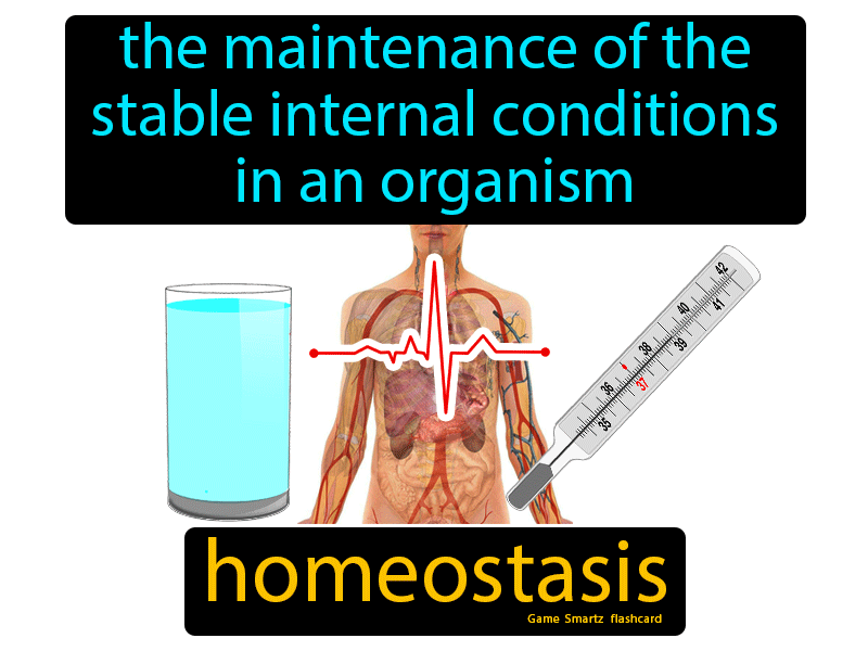 Homeostasis Definition: The maintenance of the stable internal conditions in an organism. Science.
