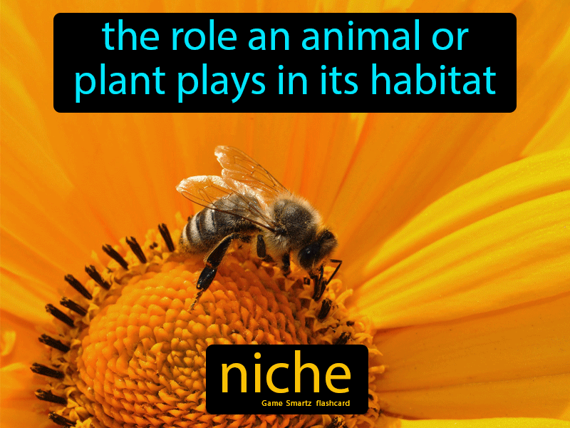 Niche Definition: The role an animal or plant plays in its habitat. Science.