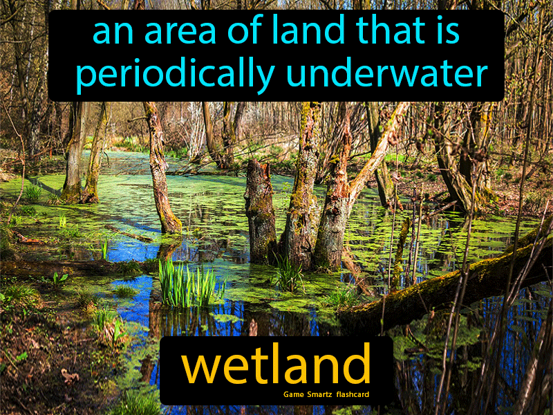 Wetland Definition: An area of land that is periodically underwater.