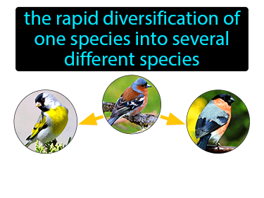 Adaptive Radiation Definition Flashcard