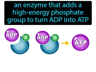 ATP Synthase Definition Flashcard