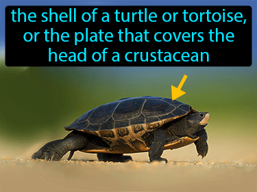 Carapace Definition Flashcard