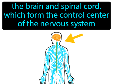 Central Nervous System Definition Flashcard