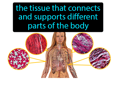 Connective Tissue Definition Flashcard