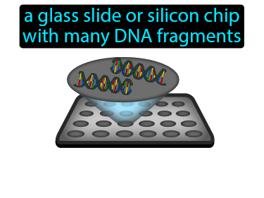 DNA Microarray Definition Flashcard