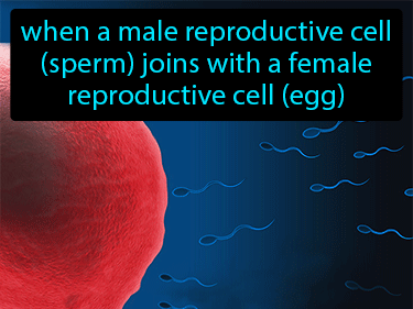 Fertilization Definition Flashcard