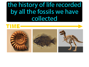 Fossil Record Definition Flashcard